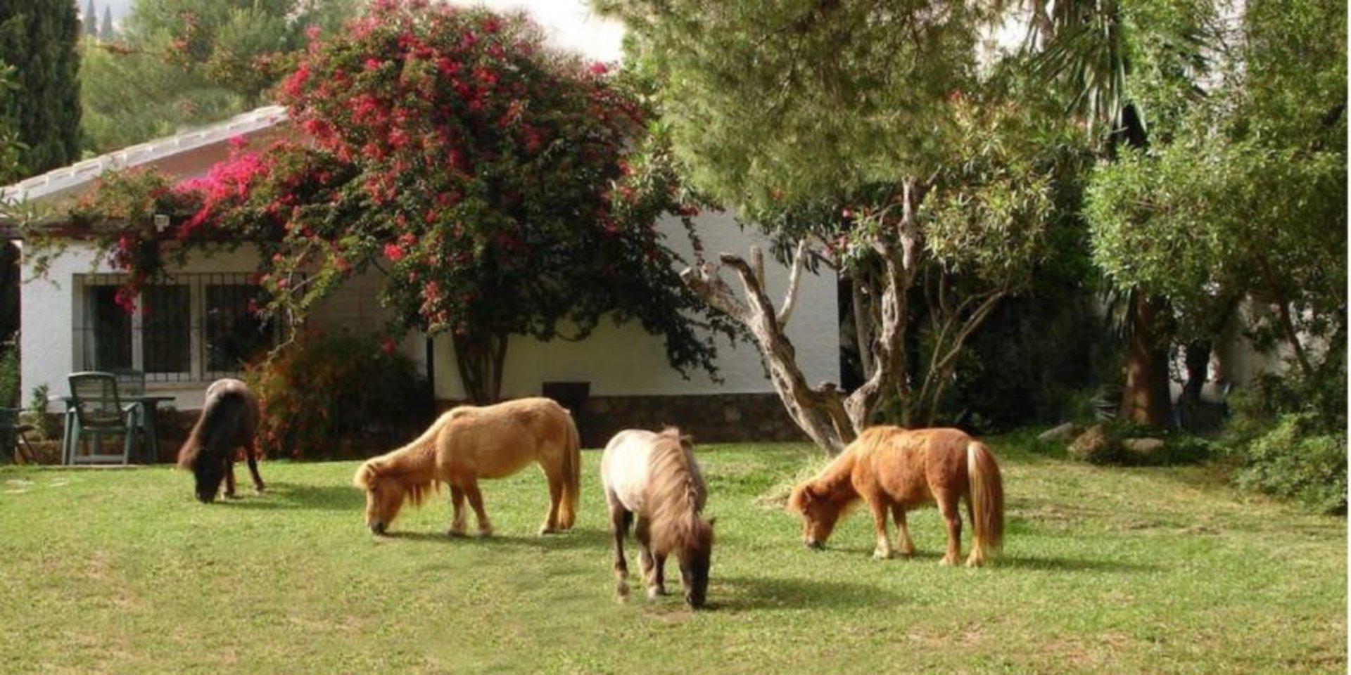 Los Rurales de Benalmádena